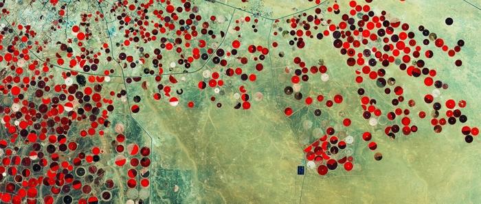 Falskt färglagd bild över odlingar i den Saudiska öknen, tagen av ESA's Sentinel-2A. Credit: Copernicus Sentinel data (2015)/ESA